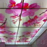 Php_45_1 Потолок витражный фотопечать